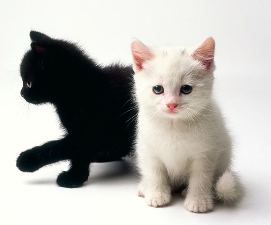 Kitty World Cute Kitten Name Cute Animals Kittens Cutest Black And White Kittens
