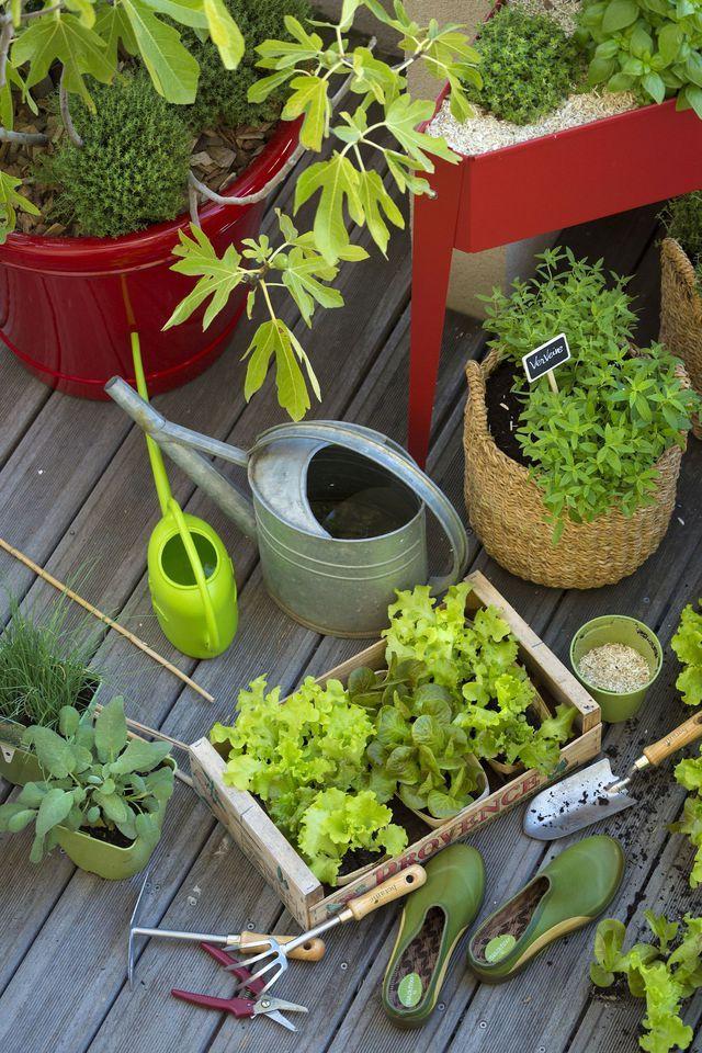 jardinage pour d butant conseils de pros jardinage et entretien du jardin. Black Bedroom Furniture Sets. Home Design Ideas