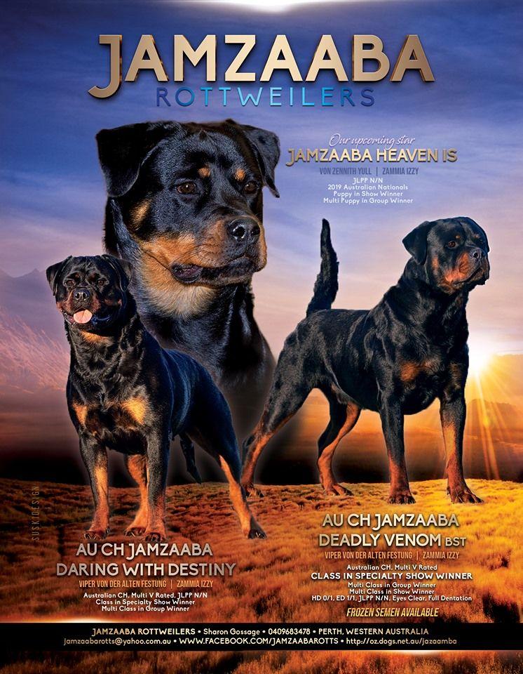 Jamzaaba Rottweilers Sharon Gossage 0409683478 Perth