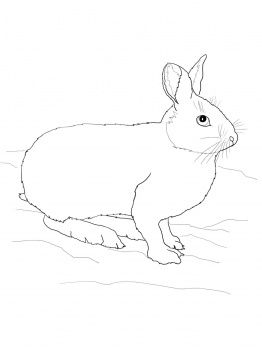 Snowshoe Hare Doodle Animals