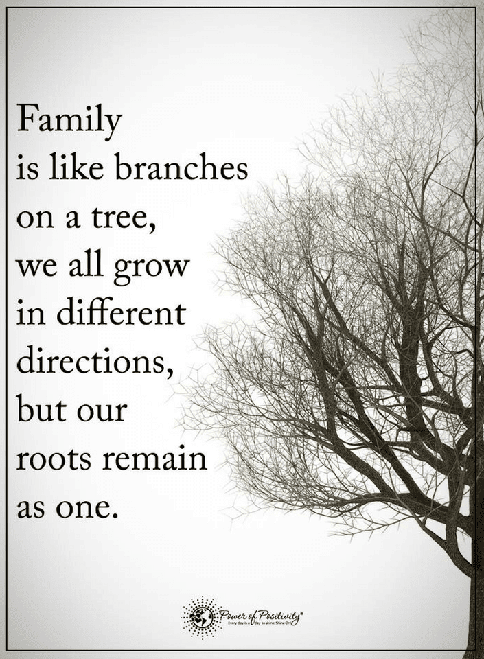 Quotes Family is like flowers in a pot, all have the same roots.