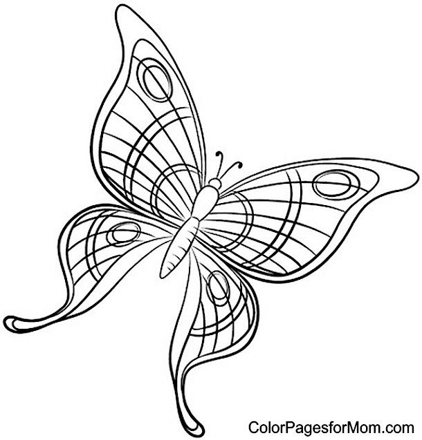 Butterfly Coloring Page 49 | oliva | Pinterest | Mariposas y Páginas ...