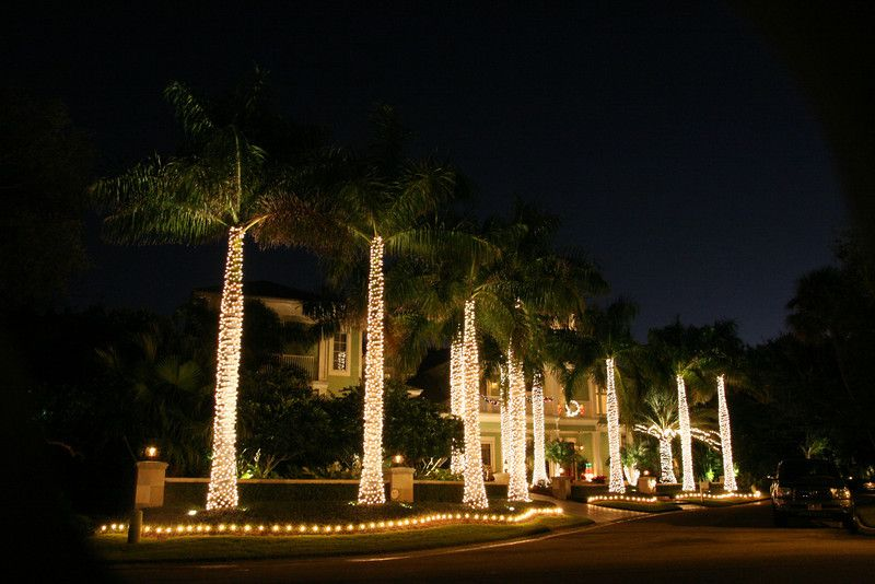 Christmas Lights In Palm Trees.Wrapping Palm Trees In Miniature White Lights Make A