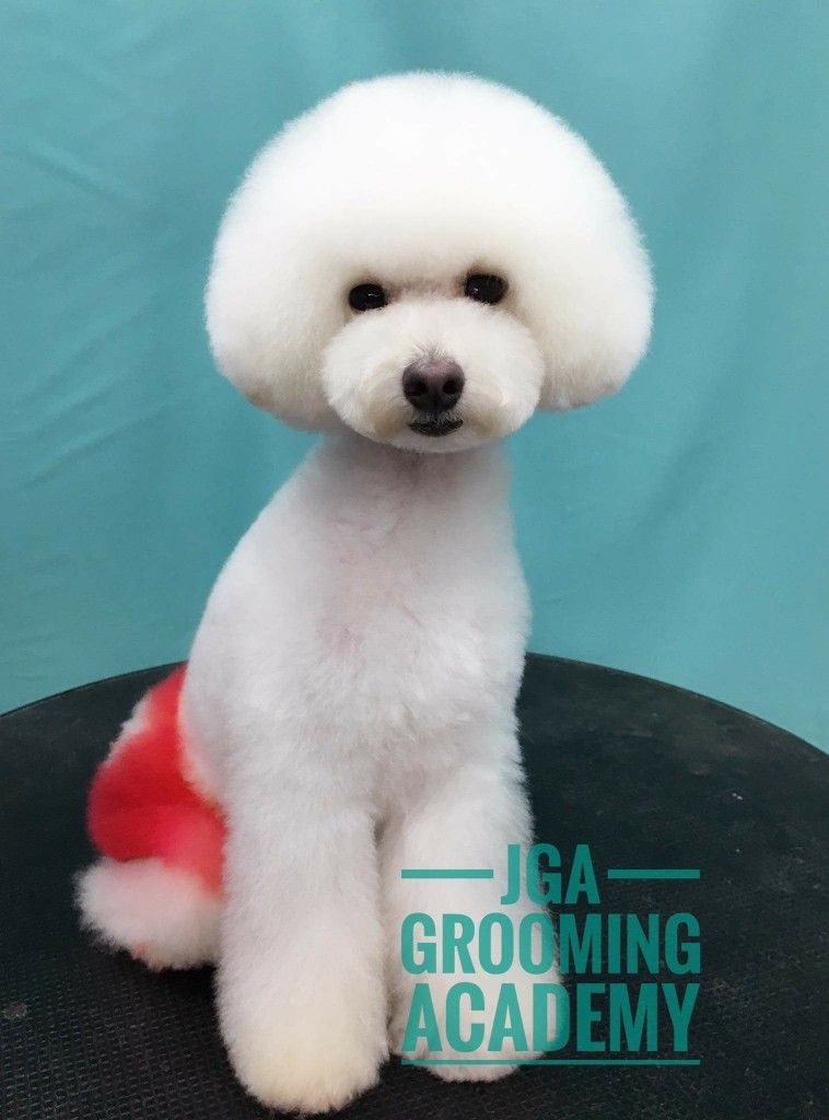Poodle with mushroom head | Dogs | Pinterest | Poodle, Dog and Pet ...