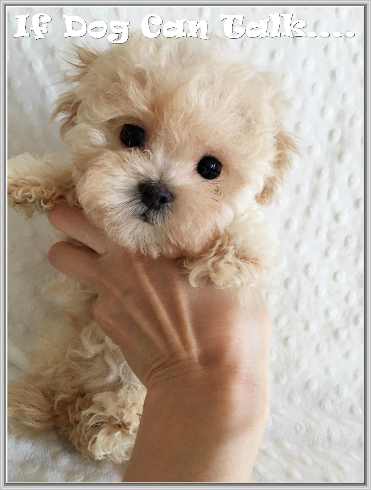 Answer To Dog Related Questions Teacup Puppies Puppies Cute