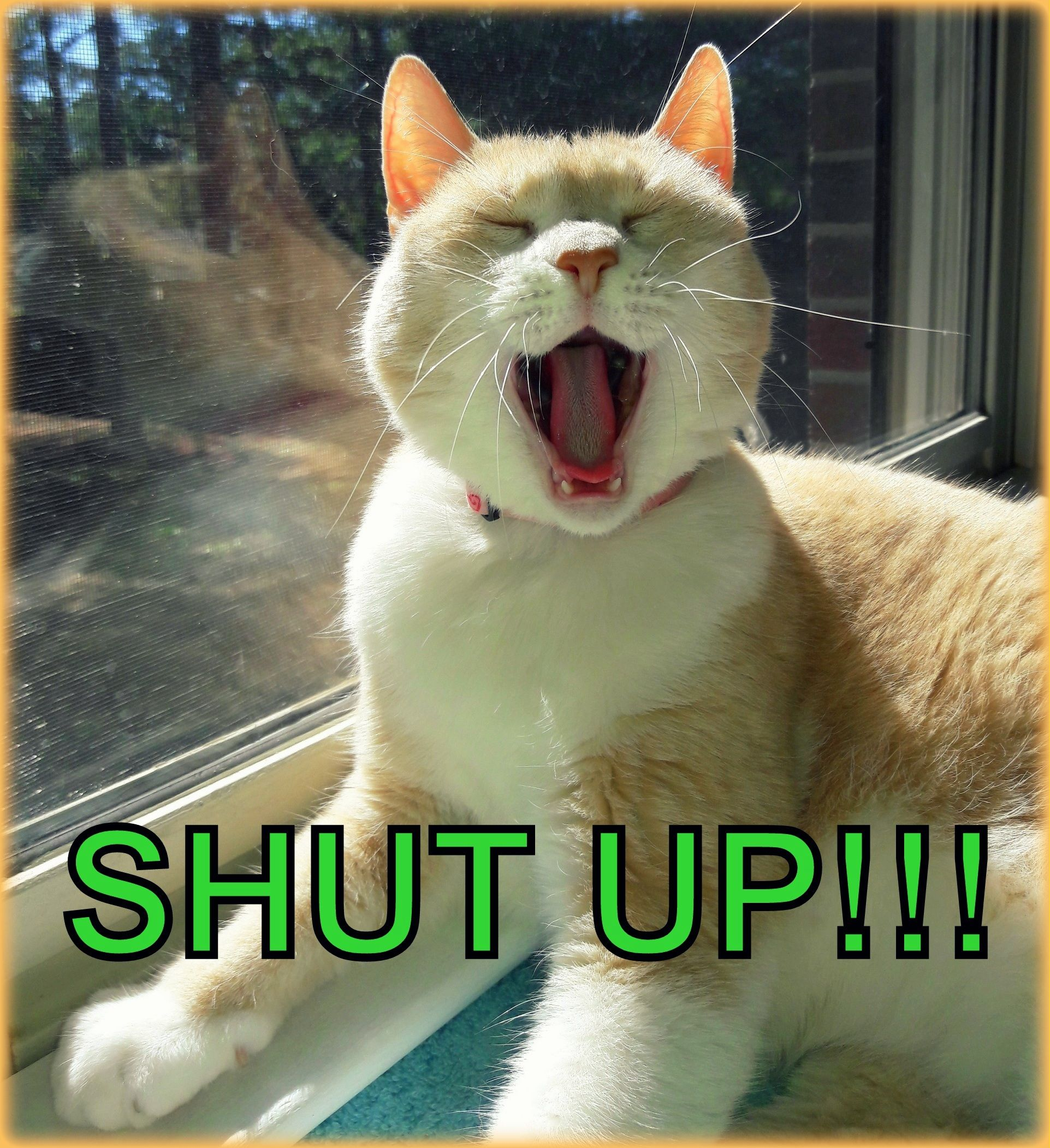 Cat Shut Up Photograph Of My Furkid Kira Belle Yawning Looking Silly Made Into Funny Meme Cat Tabby Kitty Lol Yawn Funny Animals Cats Cat Mom