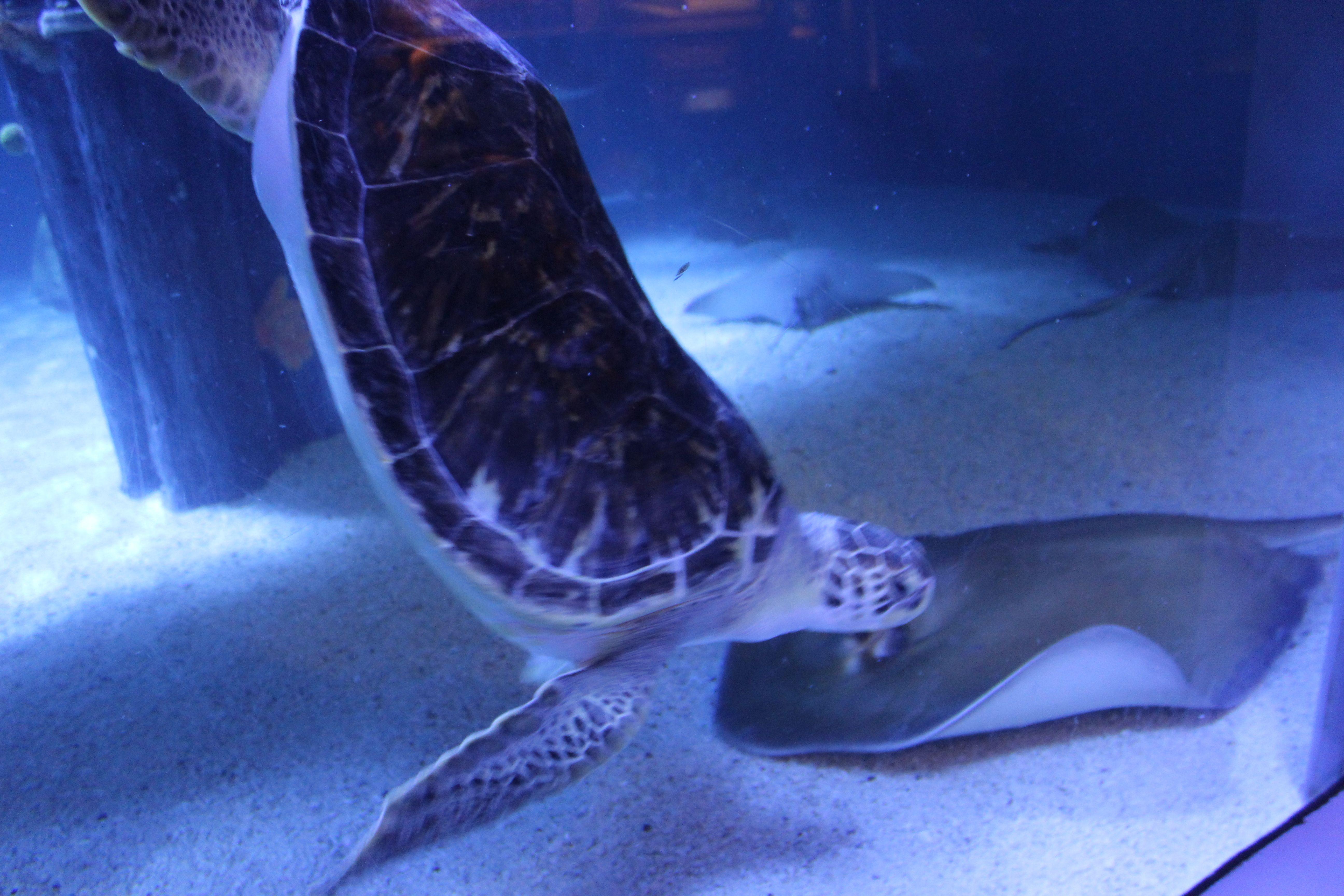 Mystic Aquarium Travel With Kids