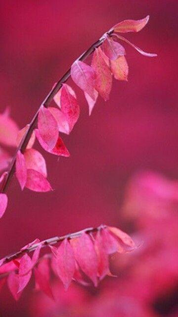 Leaf Very Cool Photo Blog Couleur Rose Photo Fleurs Fushia