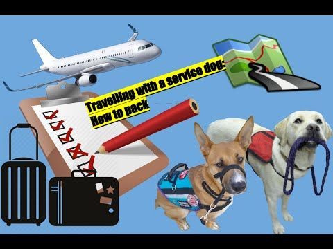 Service dogs in the SKY!!! ( A few things to bring when travelling w/ your dog) - YouTube