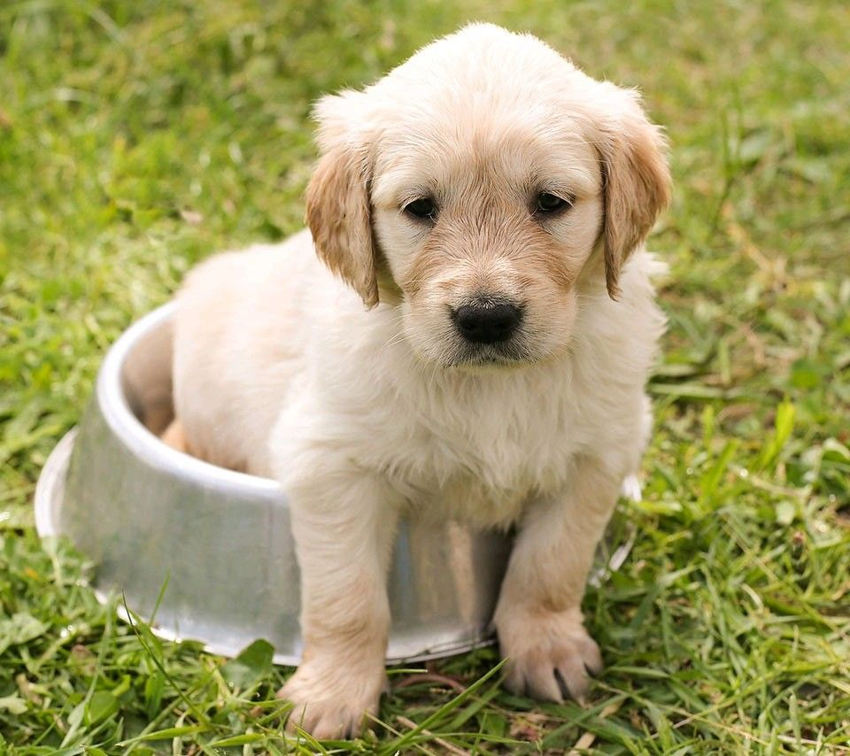 Schone Tiere Von Mchs In 2020 Hunde Hund Funnies Welpen