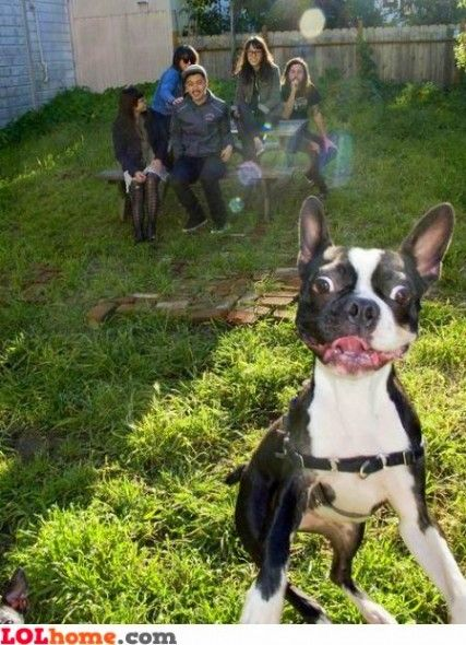 Loving Dog Photobombs Baby Portrait Happy Dogs Funny Animals