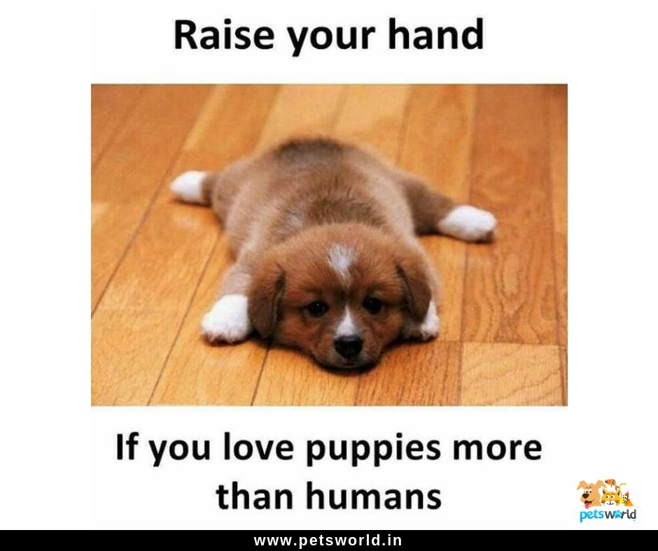 Hit Like If You Love Puppies More Than Humans Dogarelove 3 Dog Dogs Petsworld Cute Animals Dogbed Quotes Quo Buy Pets Pet Shop Cat Collars