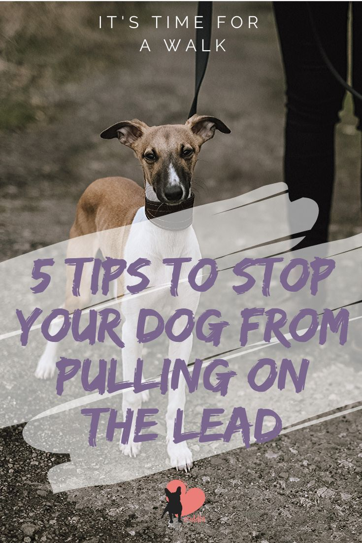 5 Tips To Stop Lead Pulling Guide Dog Activities Your Dog Dog