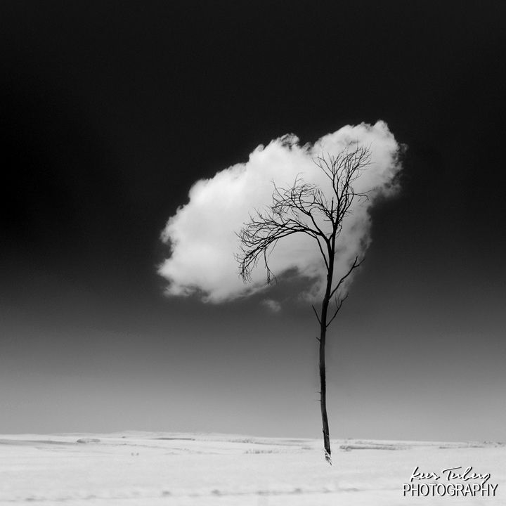 Kees Terberg, dreams