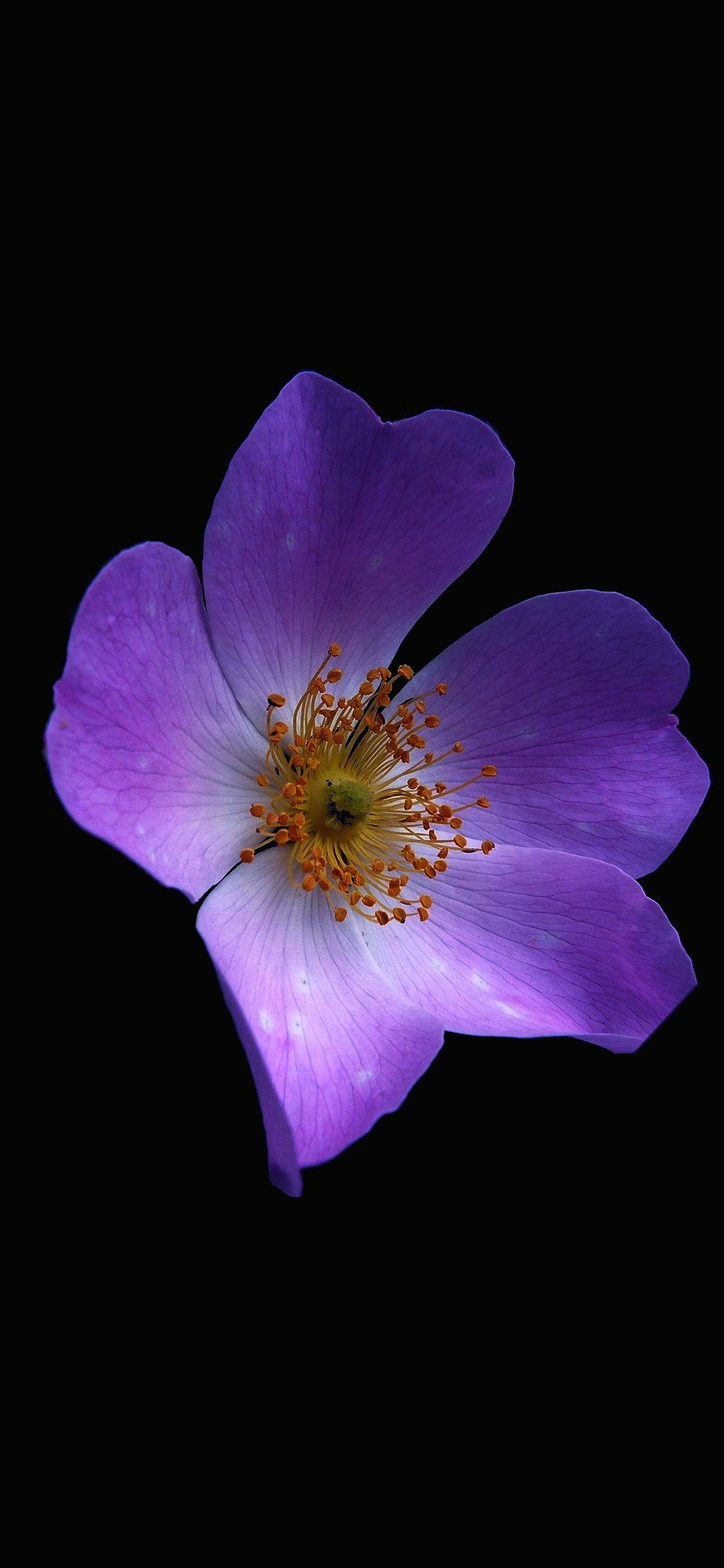 Macro flower dark purple iPhone X Wallpapers Фиолетовые