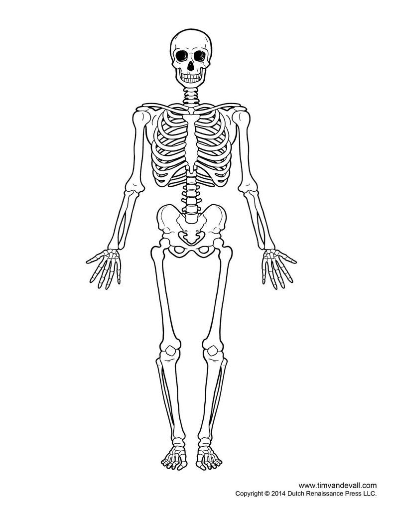 skeletal system outline printable human skeleton diagram labeled unlabeled and blank [ 791 x 1024 Pixel ]