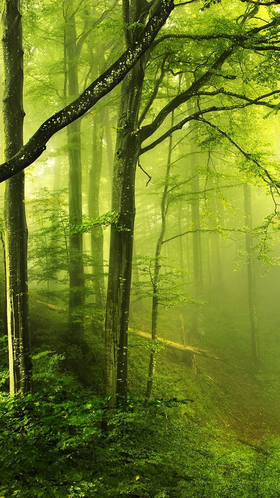 Fantasy Green Forest 4k Hd Android And Iphone Wallpaper Background And Lockscreen Check More At Https Phonewa Forest Wallpaper Forest Photos Beautiful Nature
