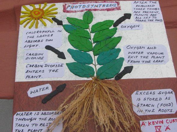 Basic Bonsai Botany Biology Plants Photosynthesis