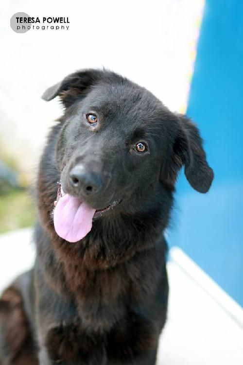 Roanoke Va Angels Of Assisi Dogs For Adoption Click On