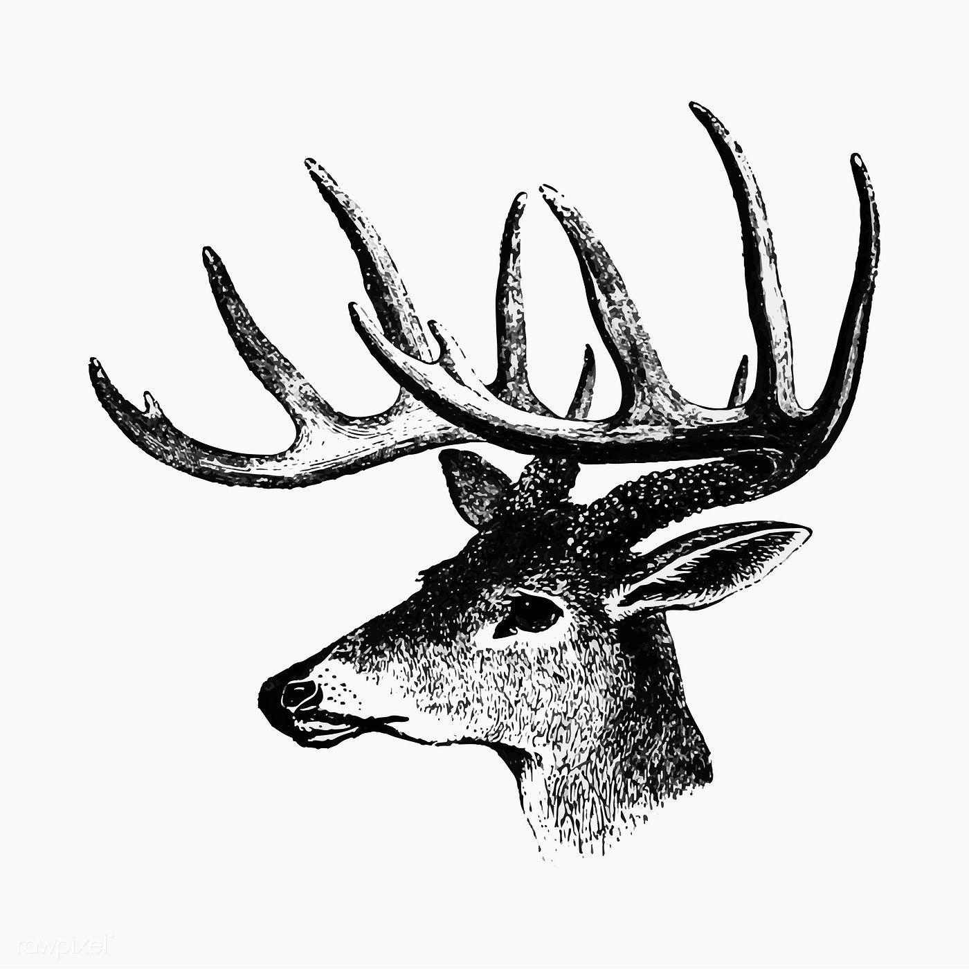 Vintage Victorian style a deer with antler engraving