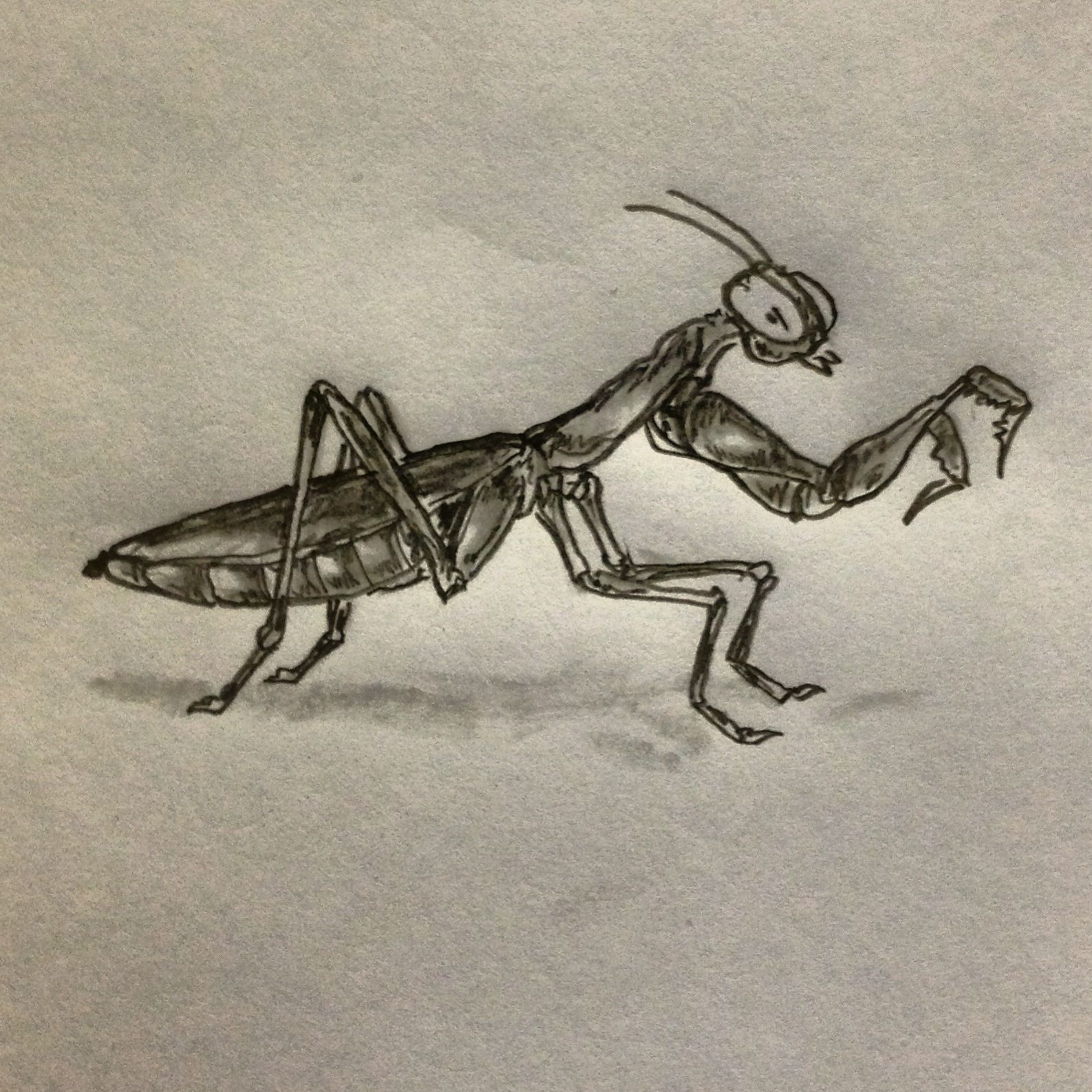 Praying Mantis Tattoo Sketch By Ranz Mantis Tattoo Praying