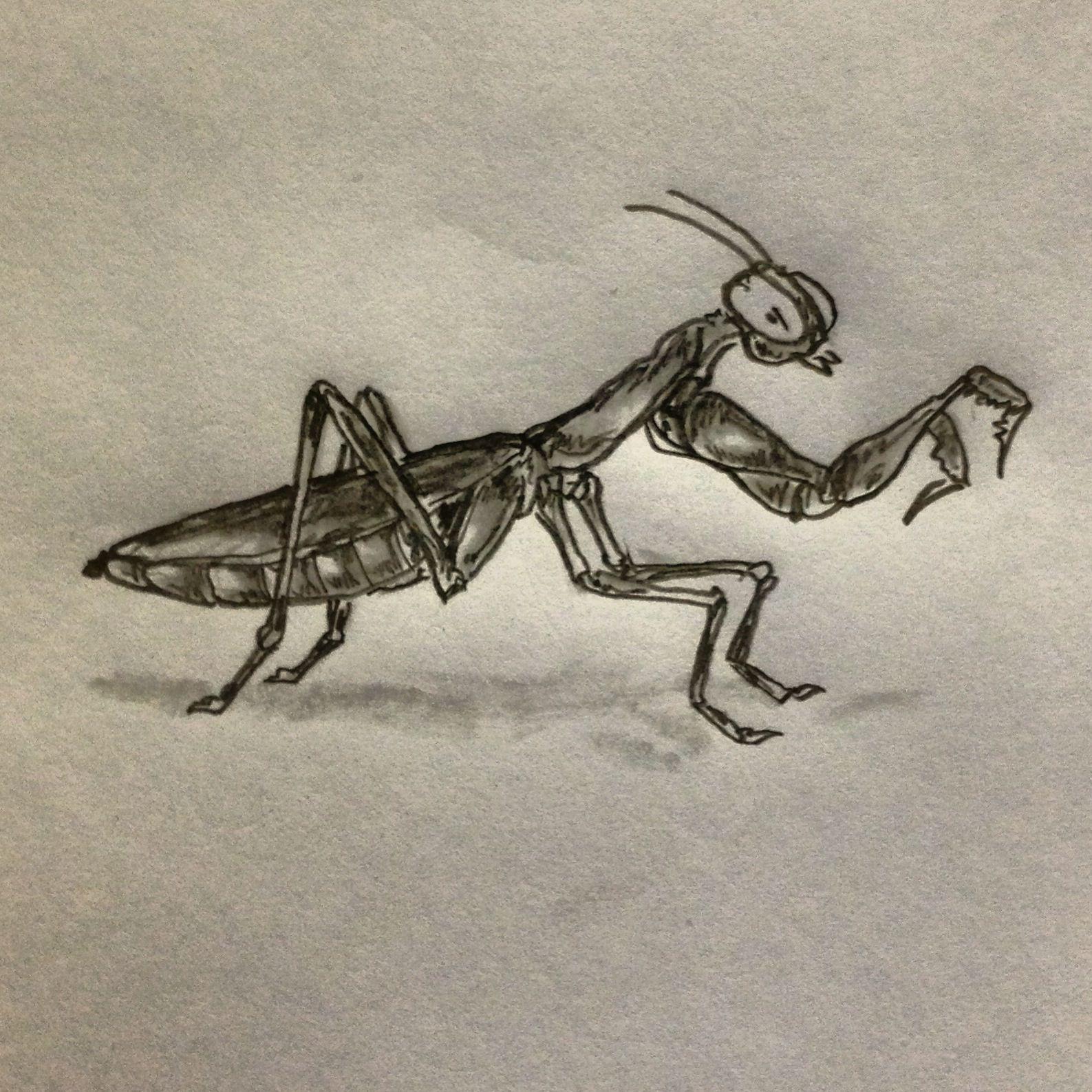 Praying Mantis Tattoo Sketch By Ranz Mantis Tattoo Praying