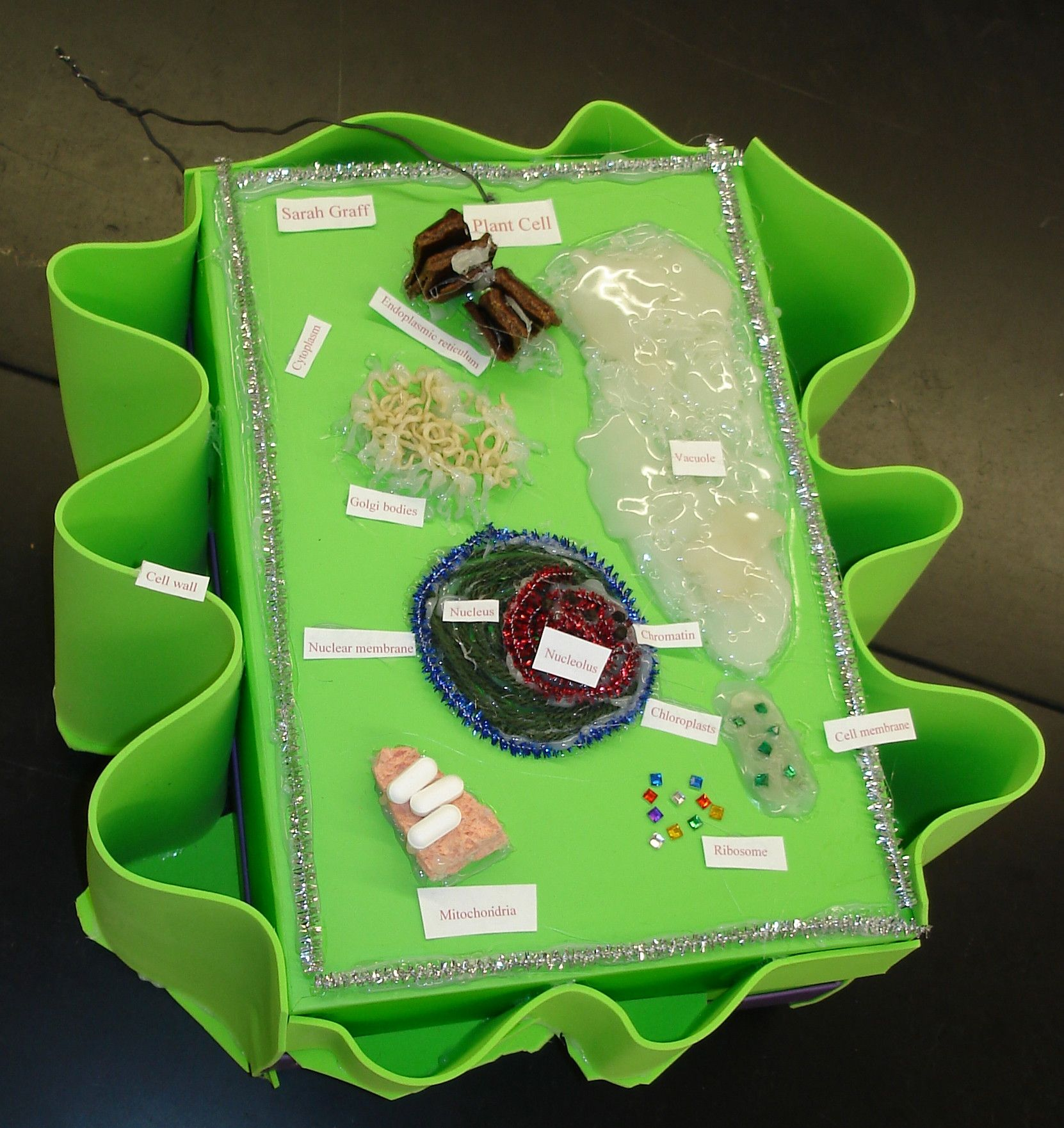 Plant cell, notice great cell wall, 2010. | Plant cell ...