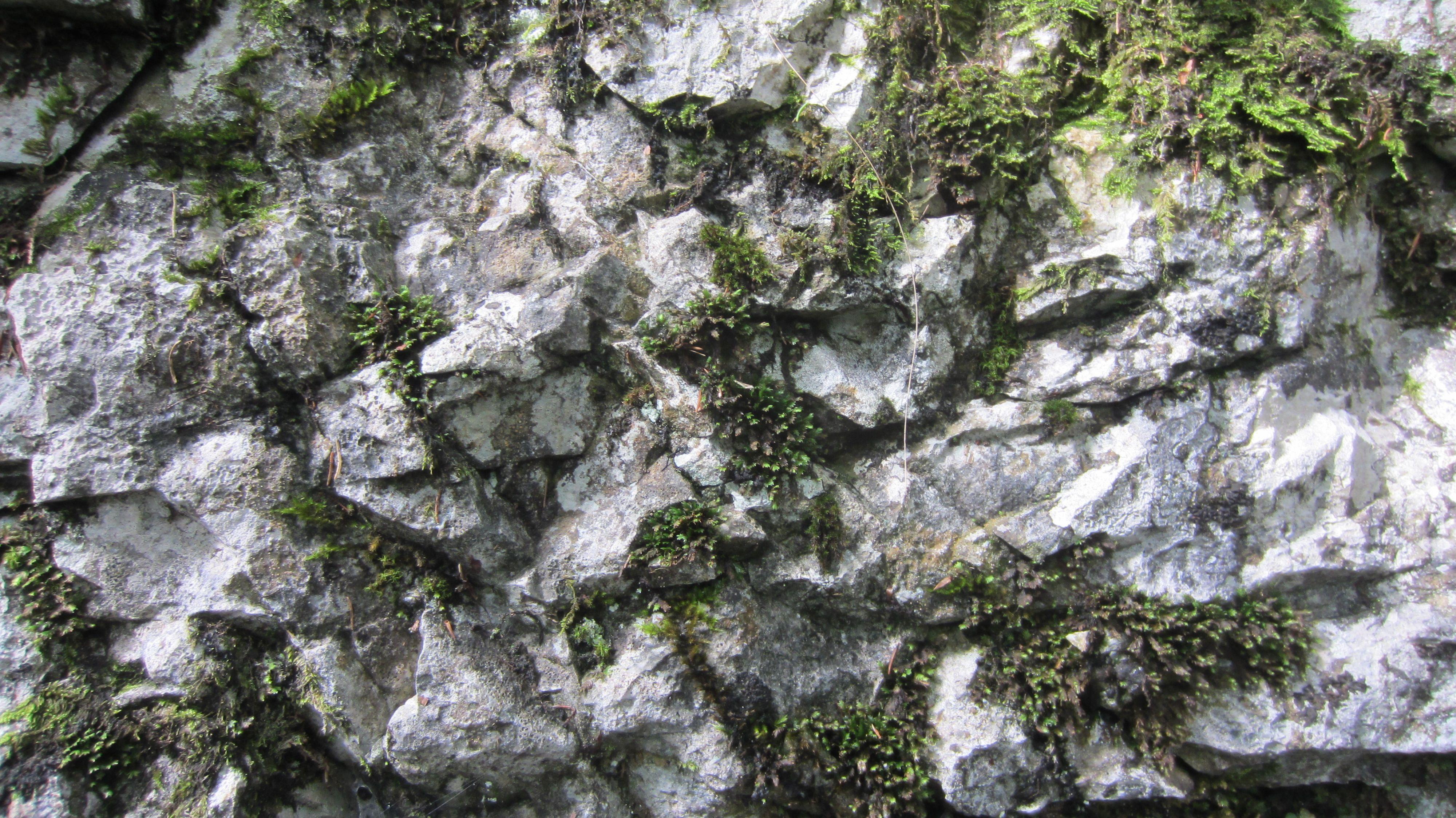 rock moss texture - Google Search | Textures | Seamless ...
