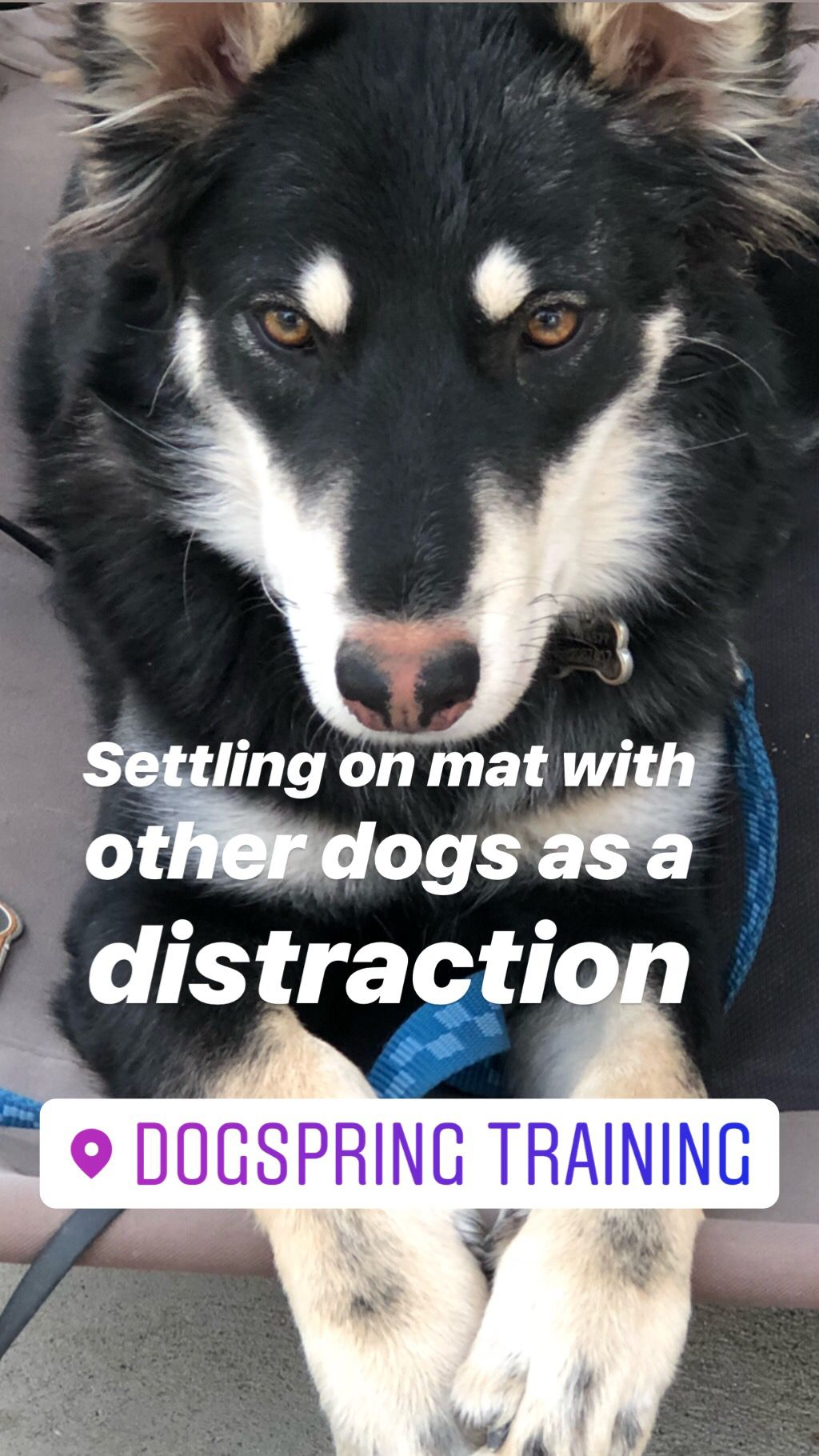 Are Smart Dogs Easier To Train Dog Training Dogs Dog Care