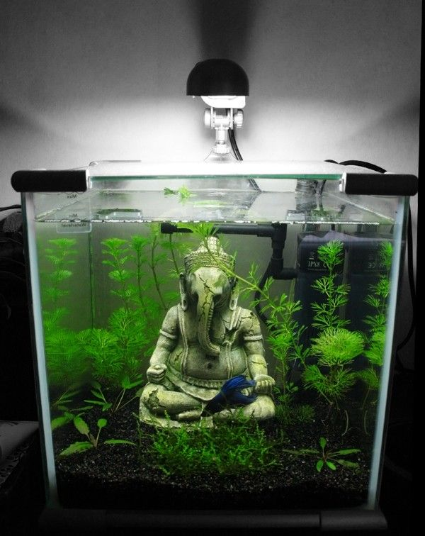 Nano Aquarium Statue Betta Pinterest Nano Aquarium Aquariums And Fish Tanks