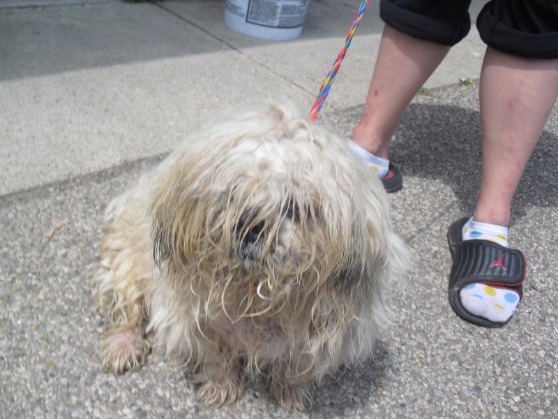 Meet 561 A Petfinder Adoptable Shih Tzu Dog Portsmouth Oh