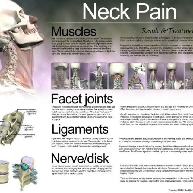 Neck pain info - anatomy of the neck, prevent neck pain by ...