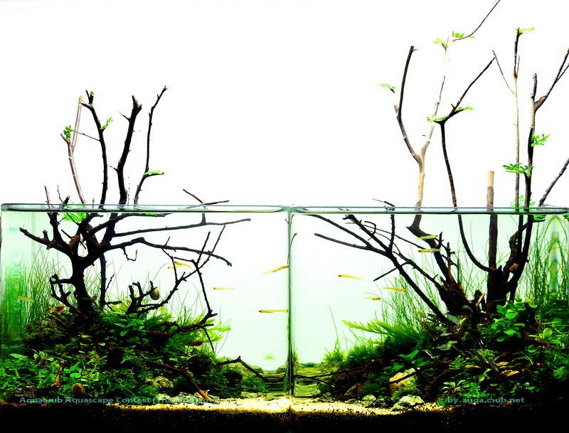 My favourite design from the AAC Thailand Aquascaping