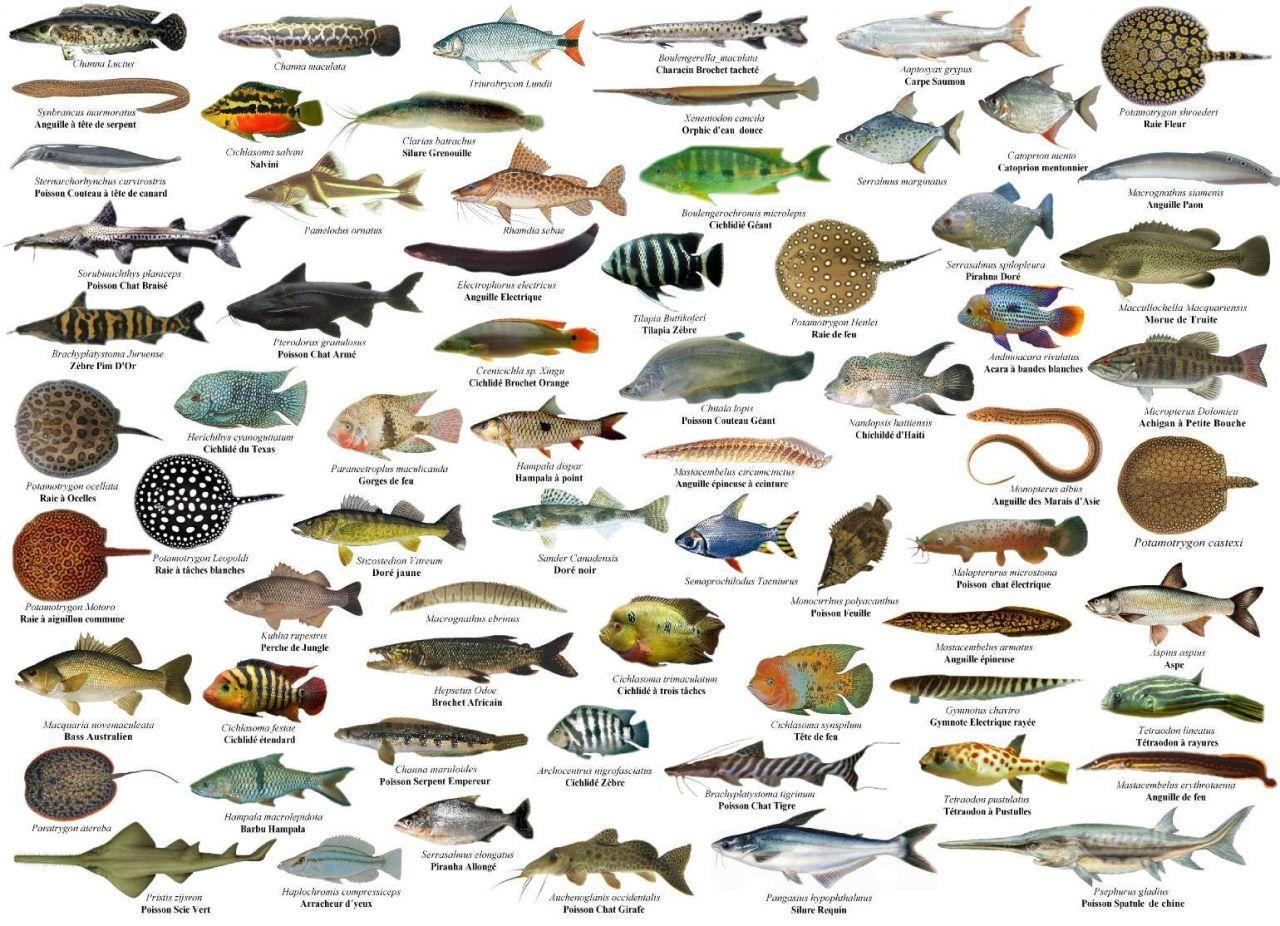 Resultado de imagem para tabelas peixes | Fishing | Pinterest | Fish ...