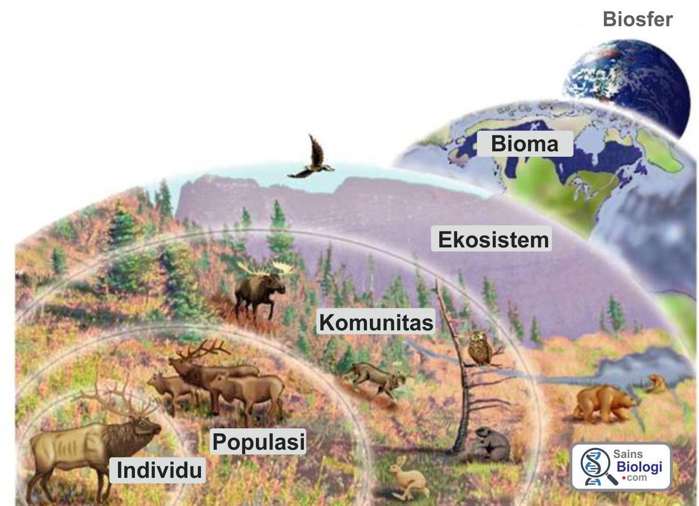 Individu Populasi Komunitas Dan Ekosistem Satuan Makhluk Hidup