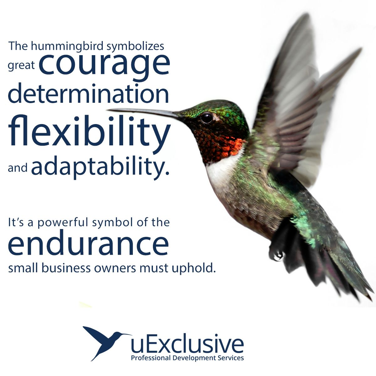 The Hummingbird Symbolizes Great Courage Determination Flexibility