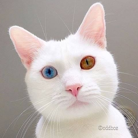 Hotels-live.com/cartes-virtuelles #MGWV #F4F #RT Pretty eyed kitty  Photo by: @oddboz Tag your friends #AnimalGlobe and follow us to be featured! by animalglobe https://www.instagram.com/p/BCumkVSrBF2/