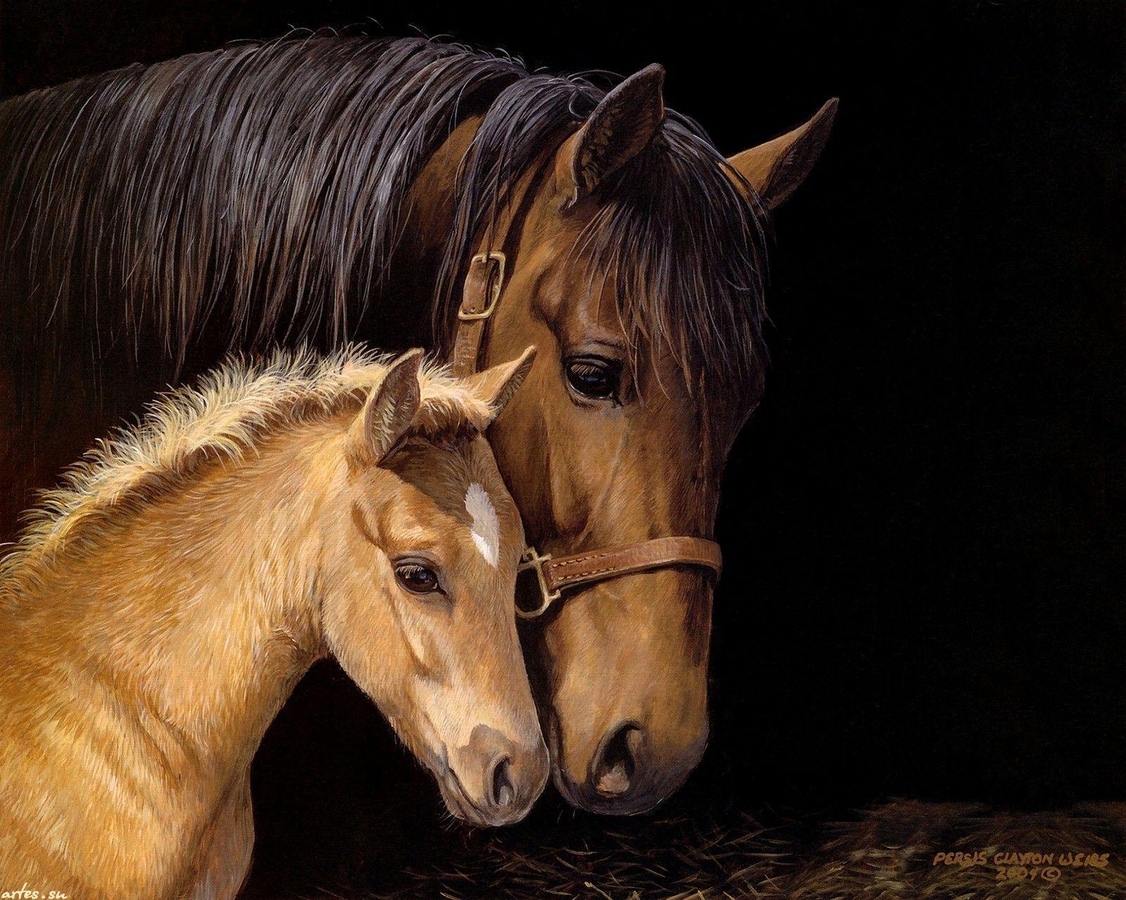 Обои лошадь, жеребёнок. Животные foto 14