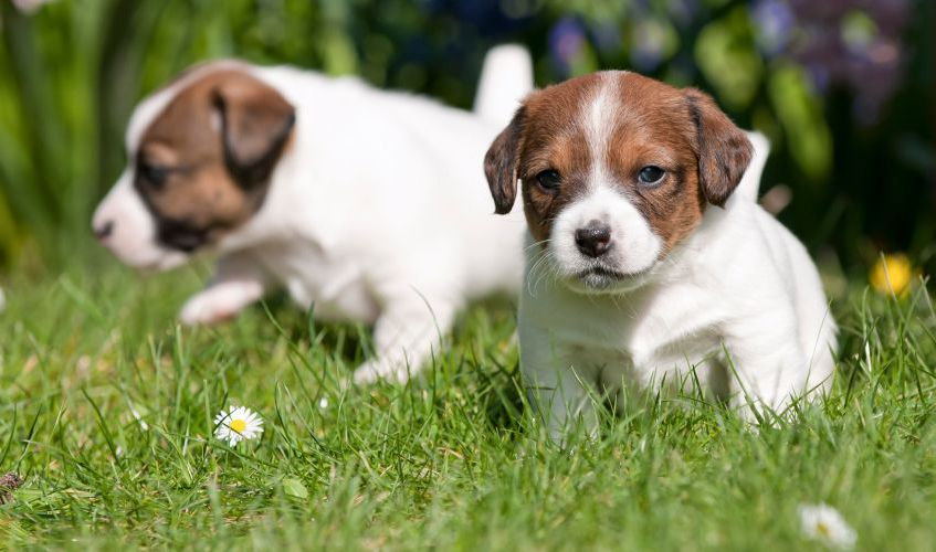 what is the best pet insurance to have