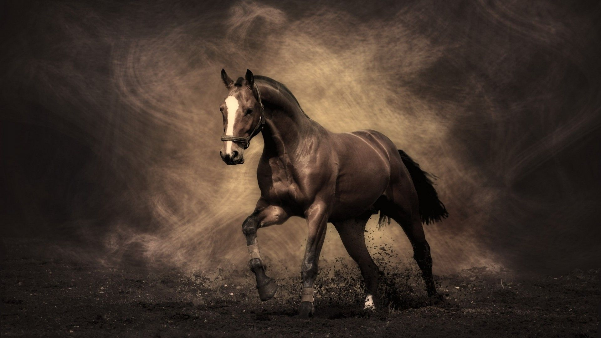 Image Detail For We All Like Horse Murals Because They Very Positive Animals And That Horse Wallpaper Horses Horse Painting