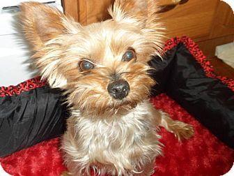 Maya She Has Only A Few Teeth She Is A Puppy Mill Dog She