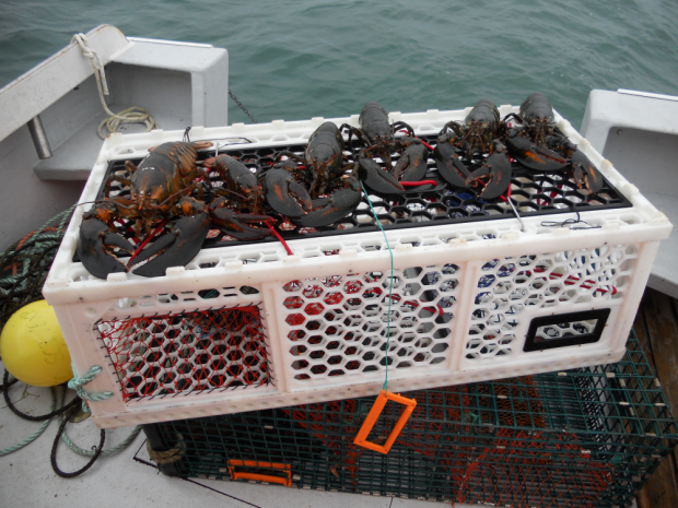 Yarmouth Businessman Creates 039 Mercedes Of Lobster Traps 039