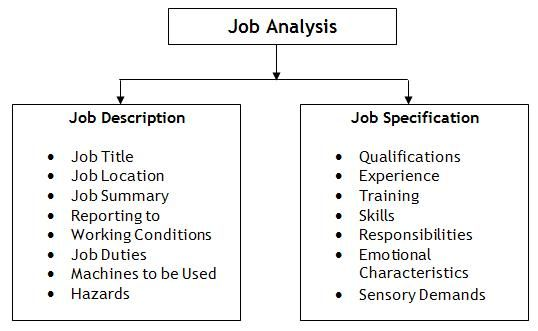 The Difference Job Description Vs Job Specification Vs Job Analysis