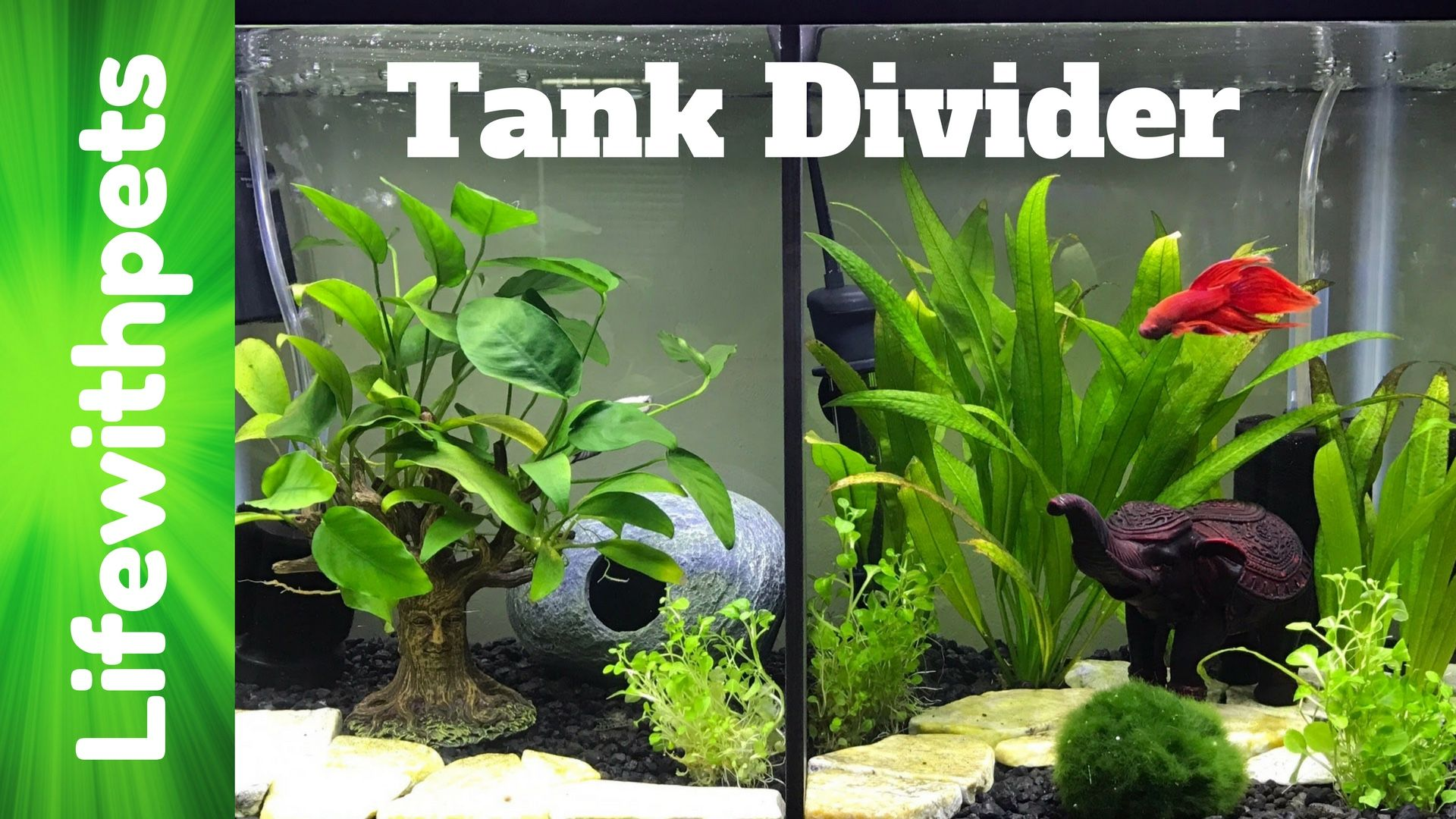 Sturdy Betta Fish tank divider Available on our website