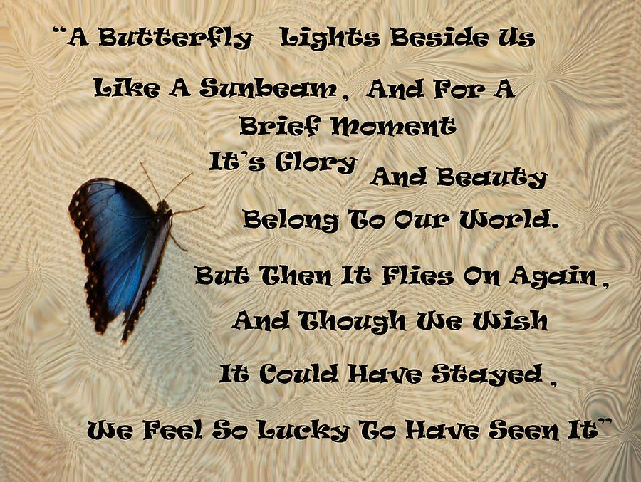 Butterfly poem photograph artwork home decor and wall art