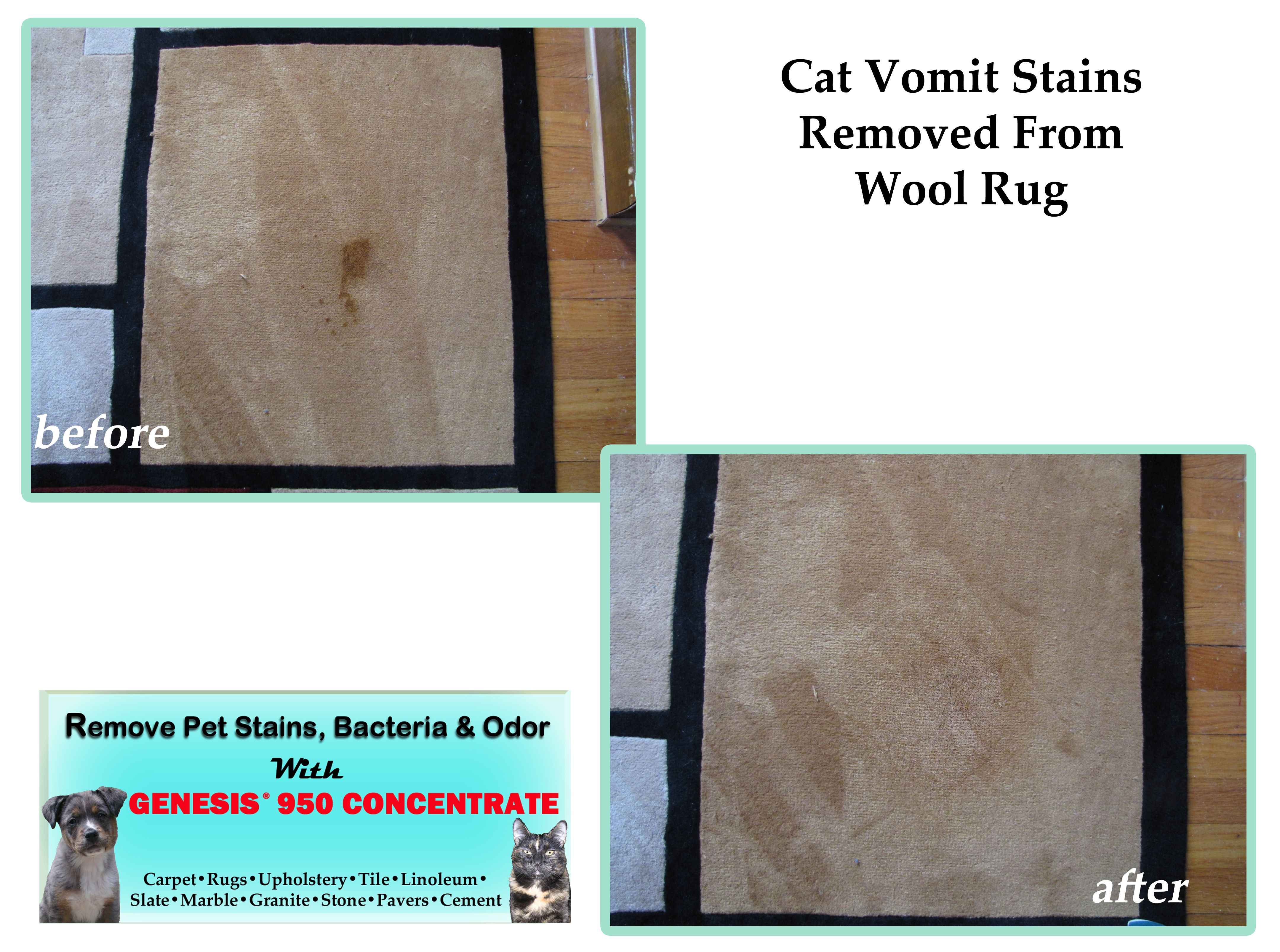 Remove Pet Stains Cat Vomit Stains Removed From Wool Rug