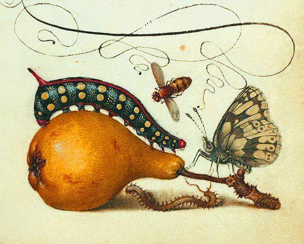 Mira calligraphiae monumenta DETAIL. Обсуждение на LiveInternet - Российский Сервис Онлайн-Дневников  PUBLIC DOMAIN