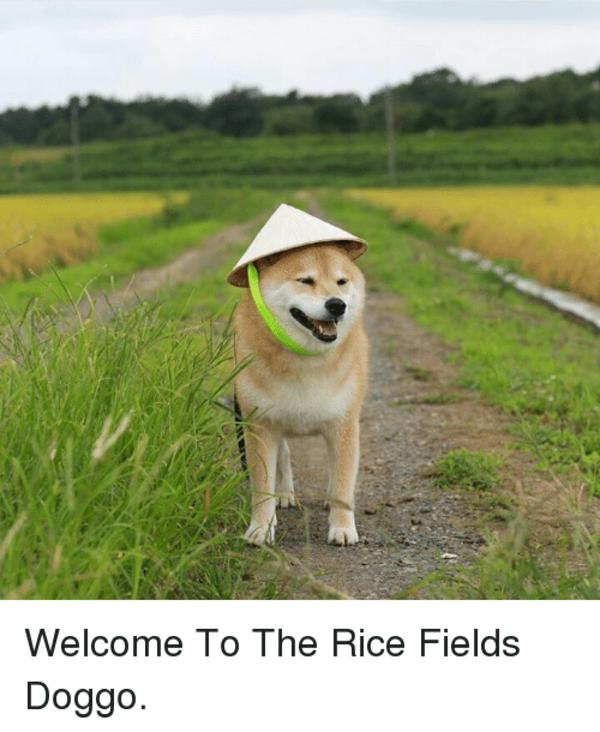 to the Rice Doggo Funny animal memes, Funny