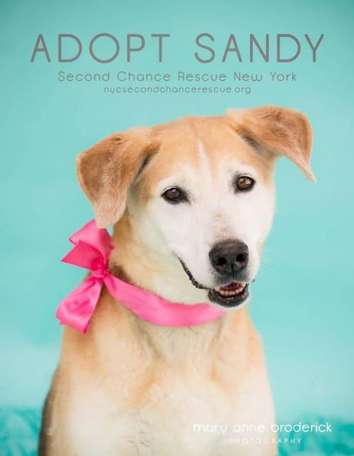Meet Sandy An Adoptable German Shepherd Dog Looking For A Forever Home If You Re Looking For A New Pet To Adopt Or Want Informa Pets Animal Activism Poor Dog