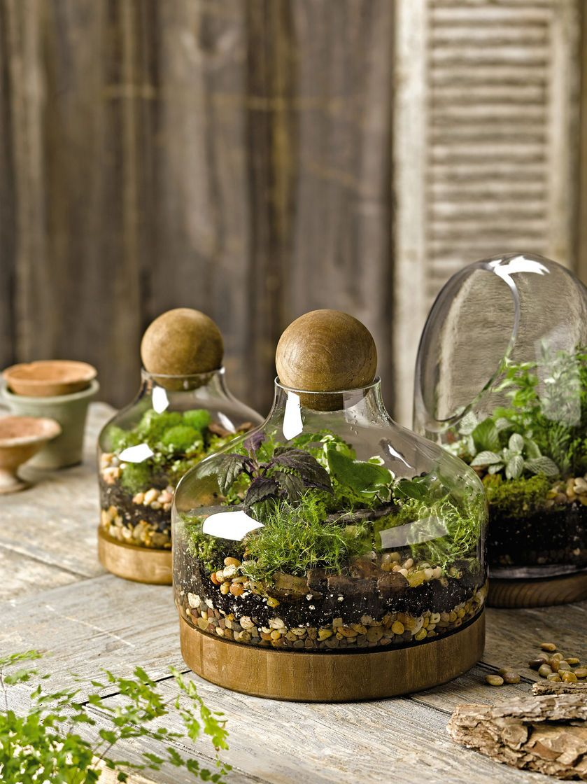 Glass & Wood Terrarium @ Gardener\'s Supply. --even on sale, way out ...